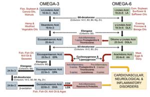 omega-3 en omega-6 metabolisme