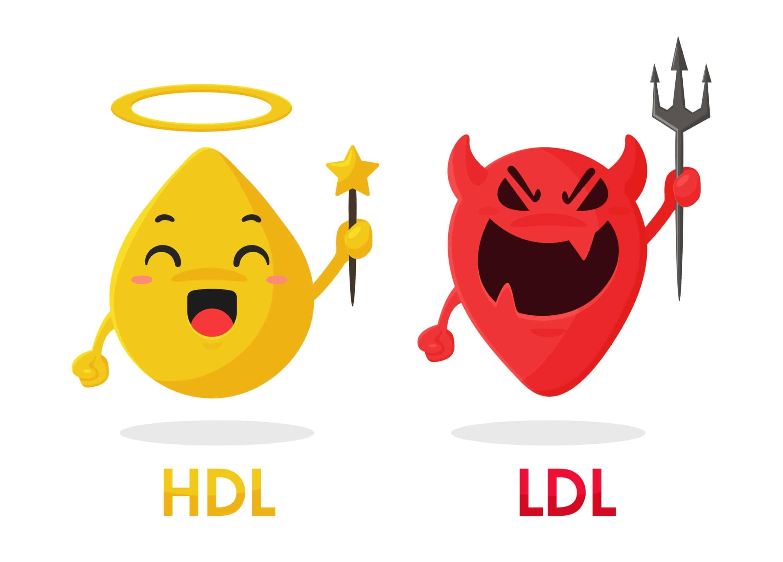 cholerice HDL en LDL