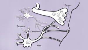 Omega-3 en hersenen